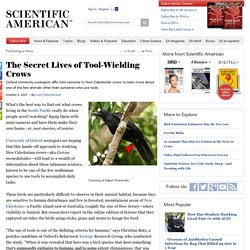 The Secret Lives of Tool-Wielding Crows