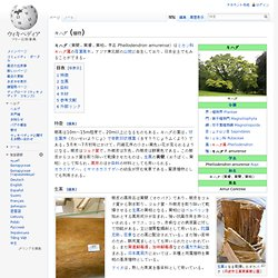 キハダ (植物)
