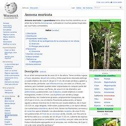 Annona muricata