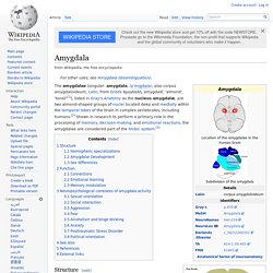 Amygdala: threat asessment and learning