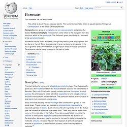 Hornwort
