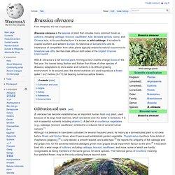 WIKIPEDIA – Brassica oleracea.