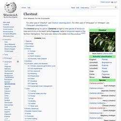 WIKIPEDIA – Chesnut.