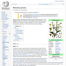 WIKIPEDIA – Brassica juncea.