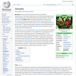 Jatropha - Wikipedia, the free encyclopedia - (Build 20100401064