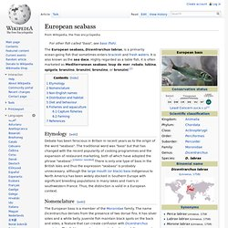 WIKIPEDIA – European seabass.