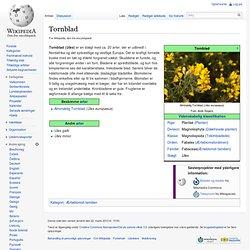 Tornblad