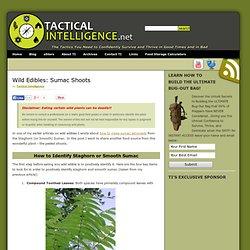 Wild Edibles: Sumac Shoots
