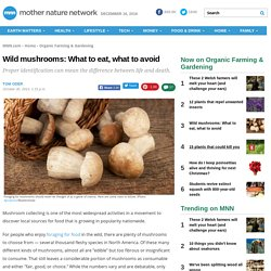 Wild mushrooms: What to eat, what to avoid