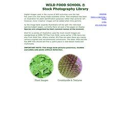 Wild Plant Stock Photos - Wild Food School