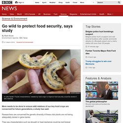 Go wild to protect food security, says study