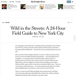 Wild in the Streets: A 24-Hour Field Guide to New York City