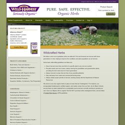 Wildcrafted Herbs - Oregon's Wild Harvest - Oregon's Wild Harvest