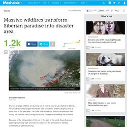 Massive wildfires transform Siberian paradise into disaster area