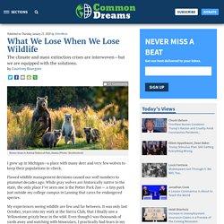 What We Lose When We Lose Wildlife
