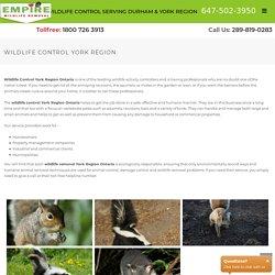 Wildlife control York Region