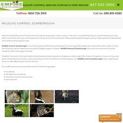 Wildlife control Scarborough