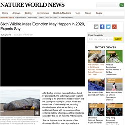 Sixth Wildlife Mass Extinction May Happen in 2020, Experts Say