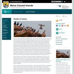 Wildlife & Habitat - Maine Coastal Islands