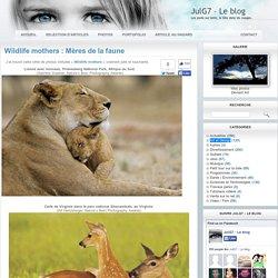 Wildlife mothers : Mères de la faune