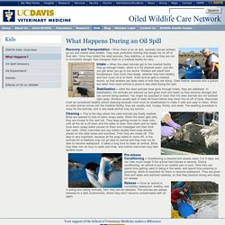 UC Davis School of Vet Med: Oiled Wildlife Care Network: What Happens During an Oil Spill