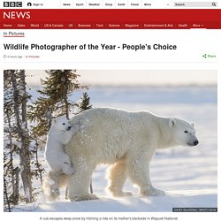 Wildlife Photographer of the Year - People's Choice
