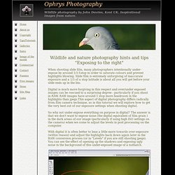 Wildlife and nature photography - hints and tips - eposing to the right