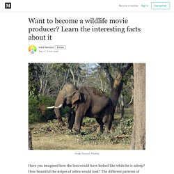 Want to become a wildlife movie producer? Learn the interesting facts about it