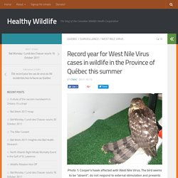 BLOG HEALTHYWILDLIFE_CA 13/10/17 Record year for West Nile Virus cases in wildlife in the Province of Québec this summer