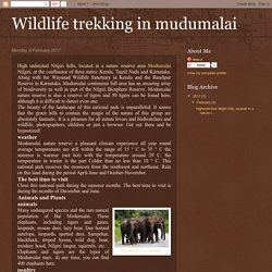Wildlife trekking in mudumalai