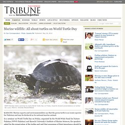 Marine wildlife: All about turtles on World Turtle Day