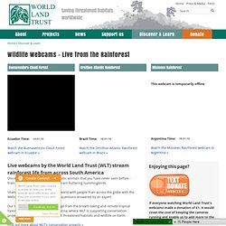 Wildlife Webcams - Live from the Rainforest | World Land Trust