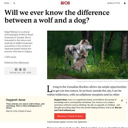 Will we ever know the difference between a wolf and a dog?