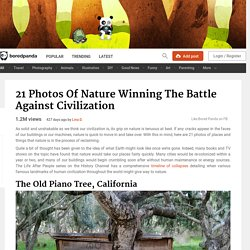 21 Photos Of Nature Winning The Battle Against Civilization