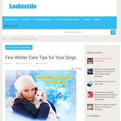 Few Winter Care Tips for Your Dogs - Leaktattle.com