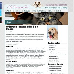 Winter Hazards for Dogs