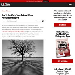 How To Use Winter Trees As Great iPhone Photography Subjects