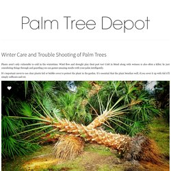 Winter Care and Trouble Shooting of Palm Trees