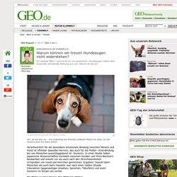 Wirkungsvoller Hundeblick - Warum können wir treuen Hundeaugen nicht widerstehen? - Tierwelt- GEO.de