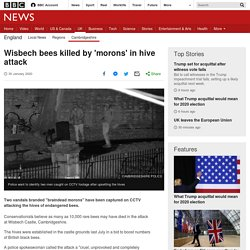 Wisbech bees killed by 'morons' in hive attack