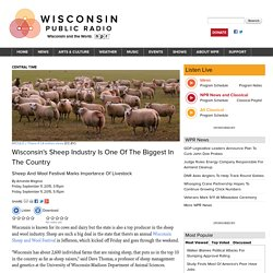 Wisconsin's Sheep Industry Is One Of The Biggest In The Country