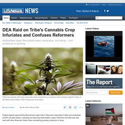 DEA Raid on Wisconsin Tribe's Cannabis Crop Infuriates and Confuses Reformers