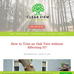How to Trim an Oak Tree without Affecting It?