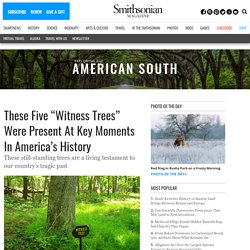 """These Five """"Witness Trees"""" Were Present At Key Moments In America's History"""
