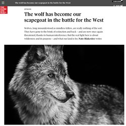 The wolf has become our scapegoat in the battle for theWest