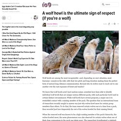 A wolf howl is the ultimate sign of respect (if you're a wolf)