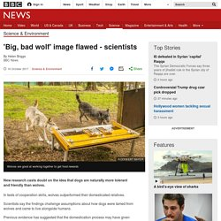 'Big, bad wolf' image flawed - scientists - BBC News
