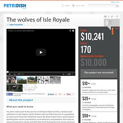The wolves of Isle Royale - Petridish