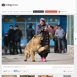 woman takes lion for a walk photo