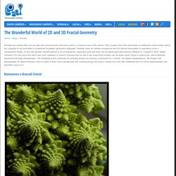 The Wonderful World of 2D and 3D Fractal Geometry - Pxleyes.com Blog